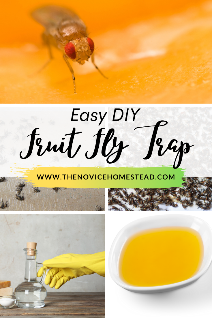 """image collage of vinegar and fruit flies; text overlay """"Easy DIY Fruit Fly Trap"""""""