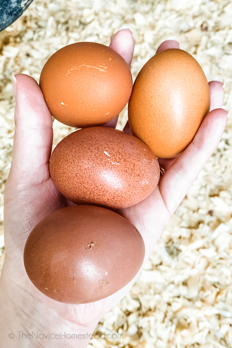 hand holding four brown chicken eggs