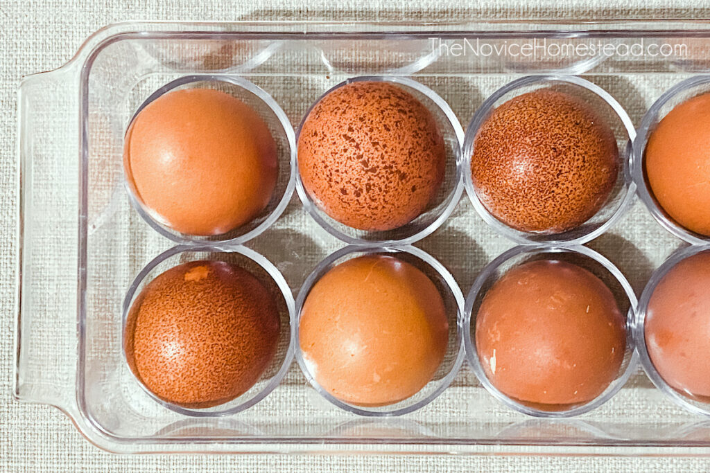 clear plastic egg container with farm fresh brown chicken eggs
