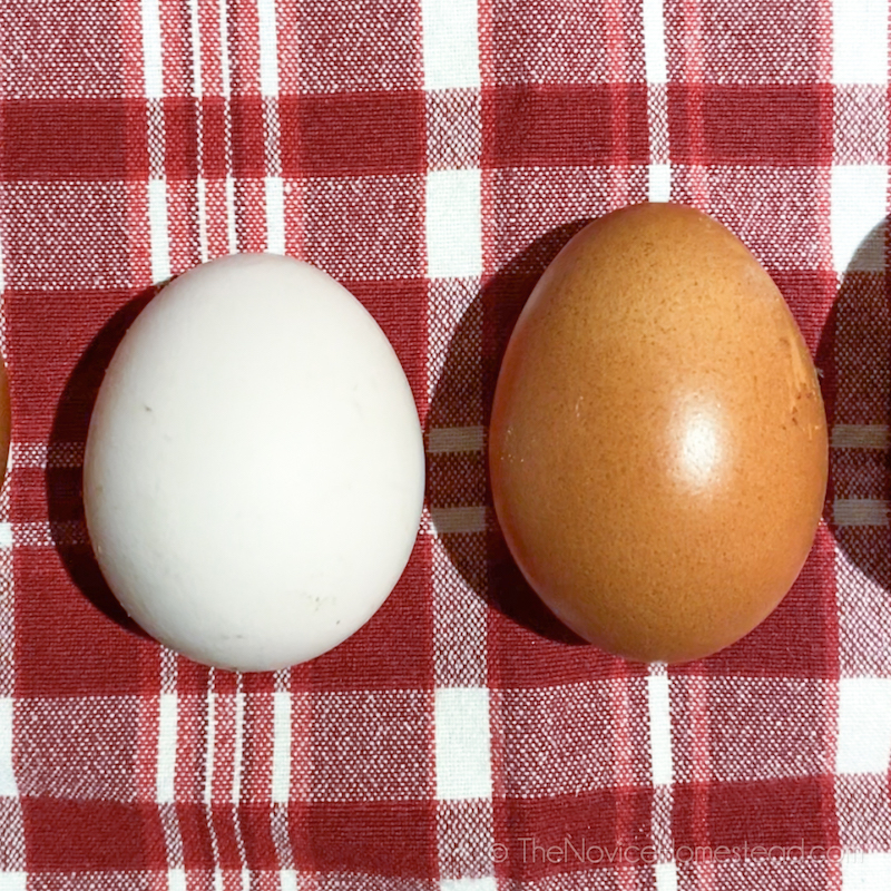 white and a brown chicken egg side by side
