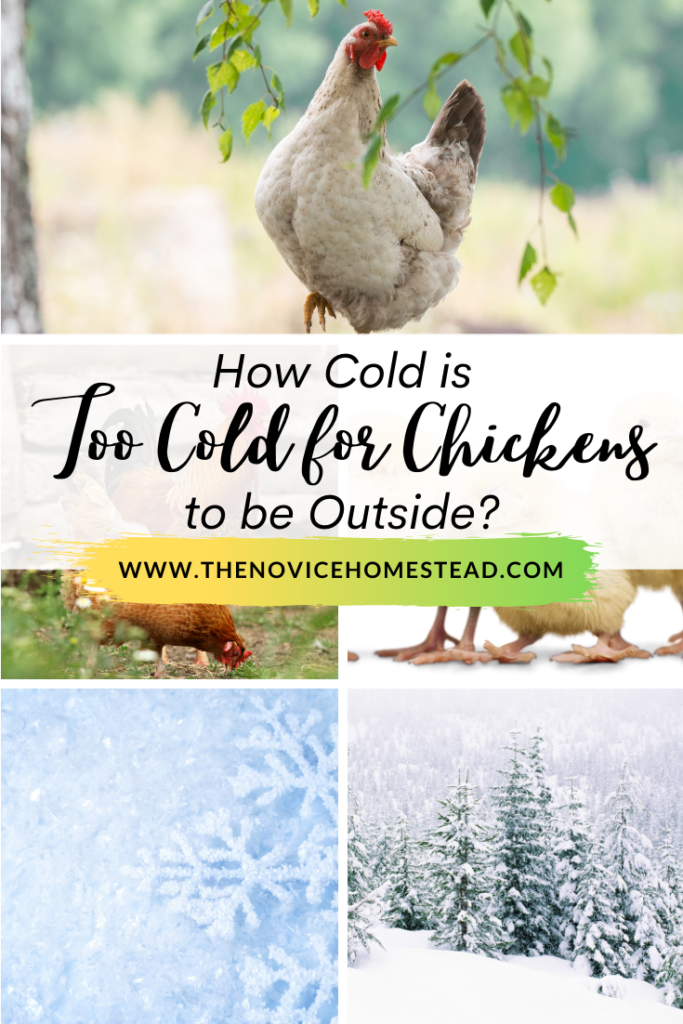 """collage of photos of chickens and snow; text overlay """"How Cold is Too Cold for Chickens to Be Outside"""""""