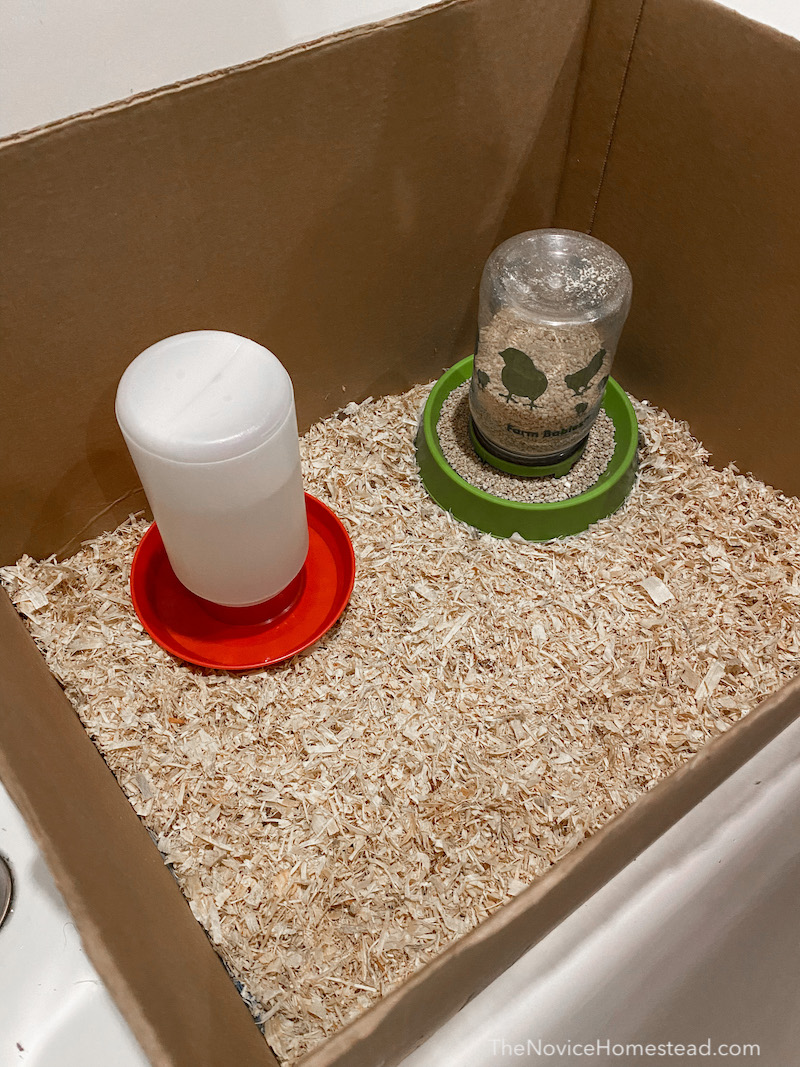 setting up a brooder box for baby chicks