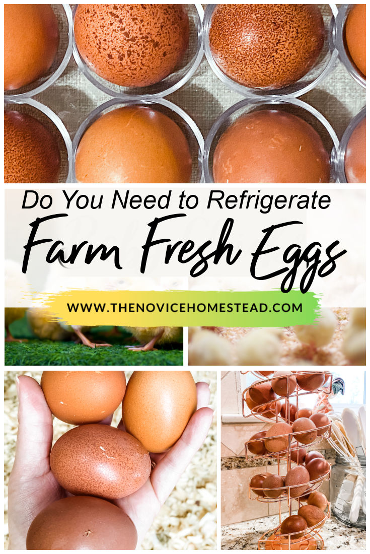 """collage of photos of fresh brown eggs; text overlay """"Do You Need to Refrigerate Farm Fresh Eggs"""""""