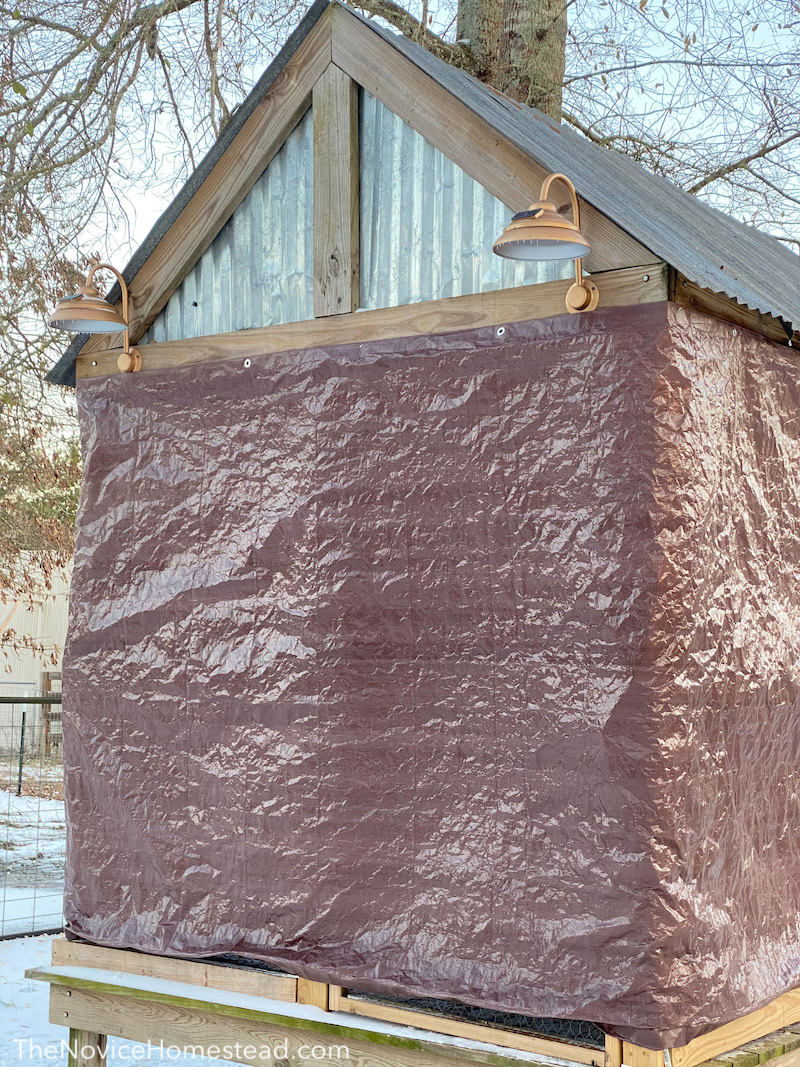 winterizing a chicken coop by covering it with a tarp