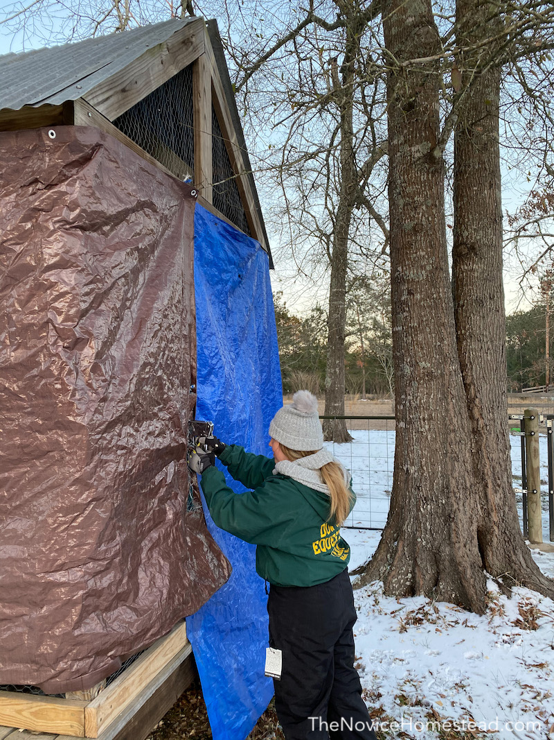 stapling a tarp to the outside of a chicken coop to winterize it