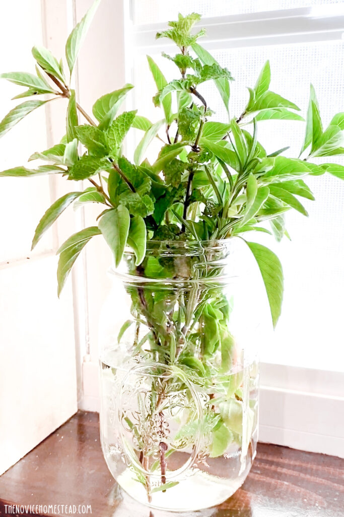 fresh cut herbs in mason jar