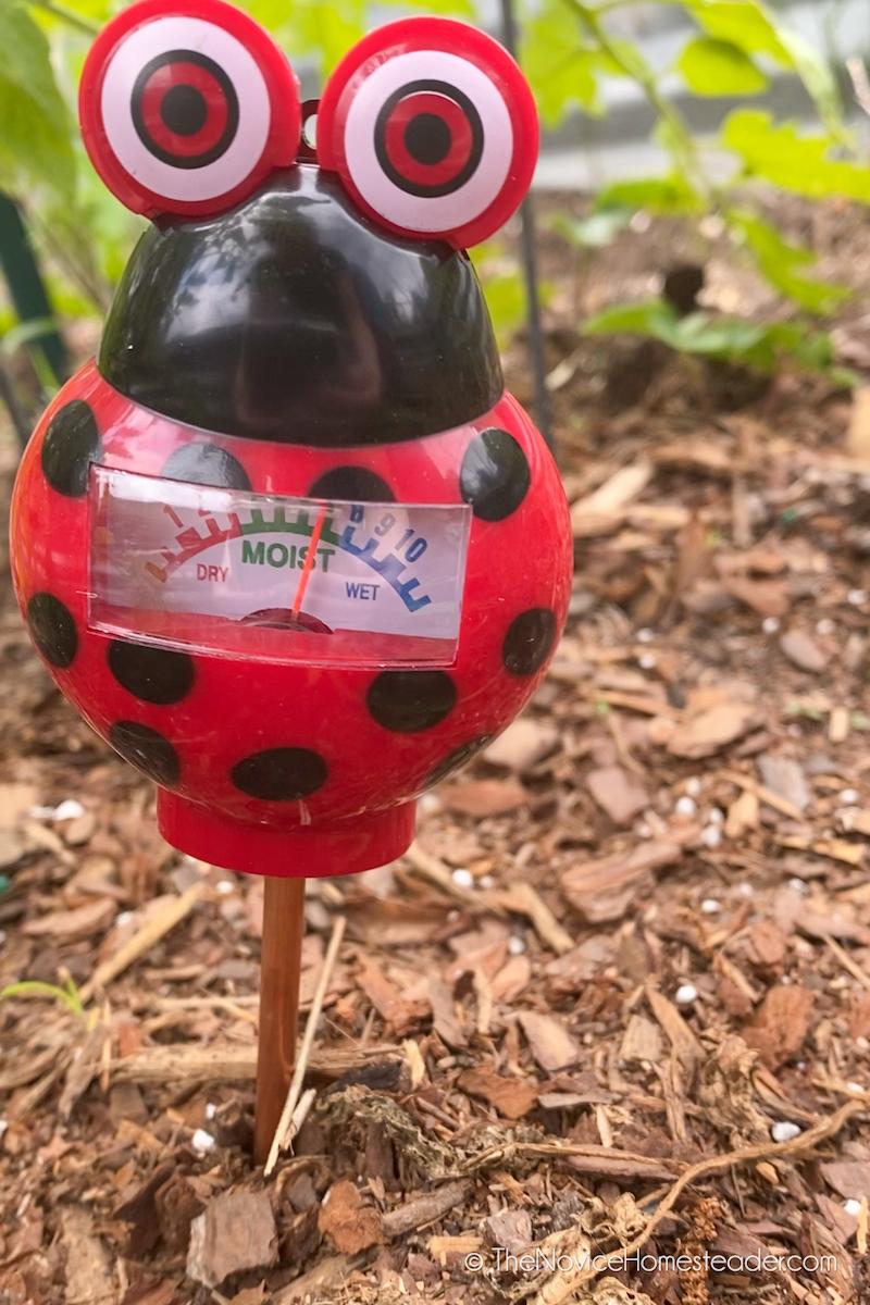 soil moisture probe to tell how often to water the garden