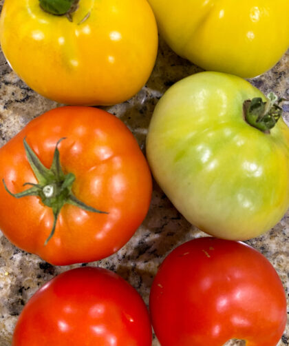 fresh tomatoes in different colors on counter