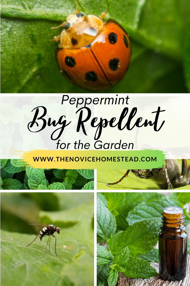 """collage of photos showing bugs and mint plants; text overlay """"Peppermint Bug Repellent for the Garden"""""""
